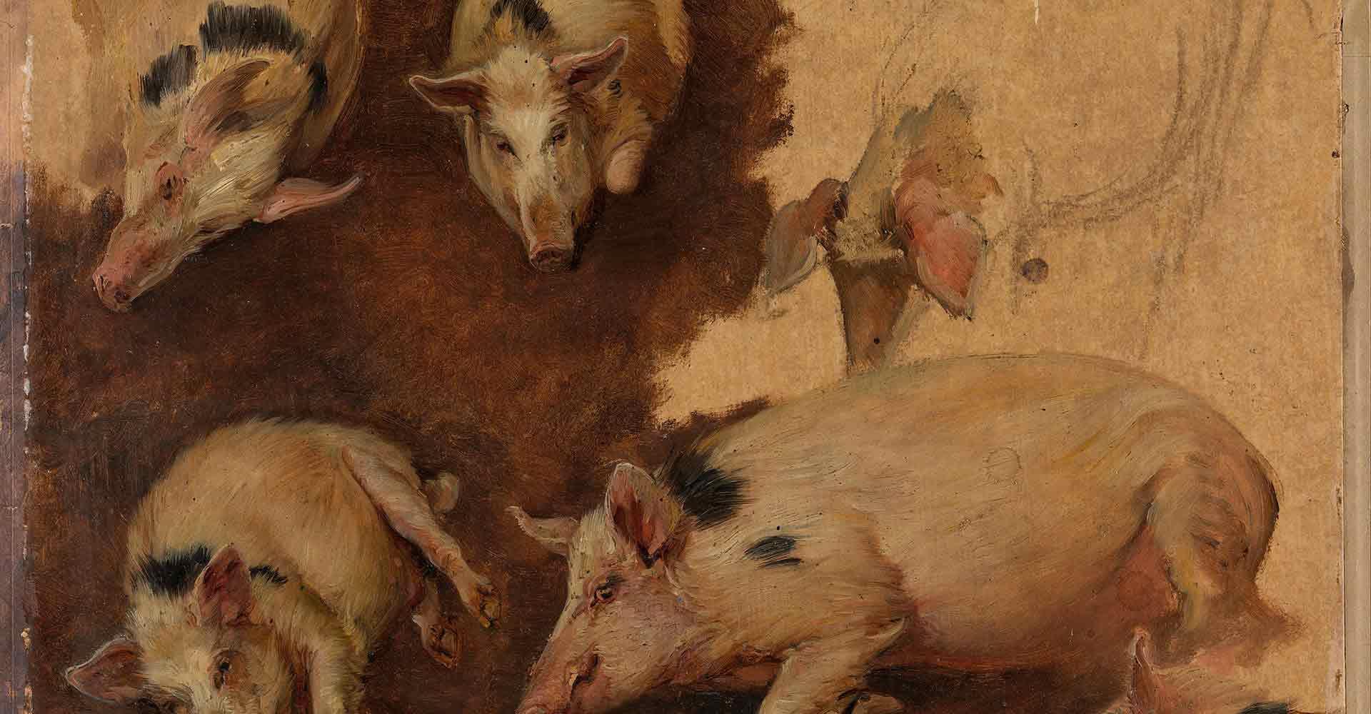 pigs, study of six pigs