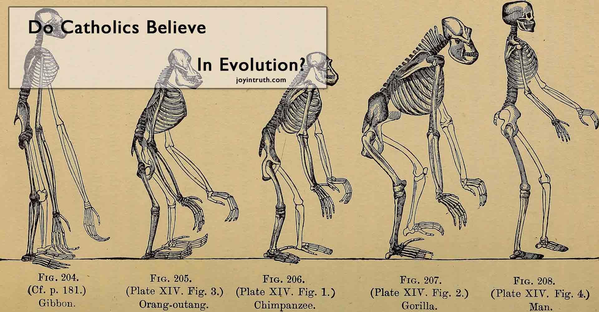 catholics and evolution