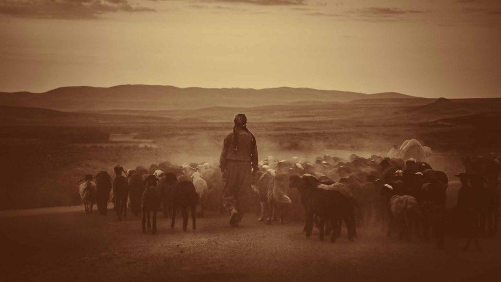 shepherd, shepherds